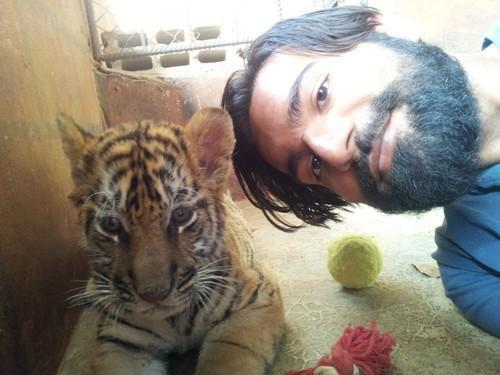 Bearded man selfie with young tiger