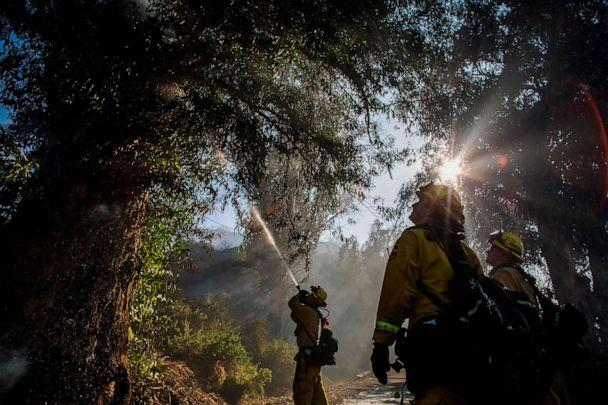 PHOTO: Firefighters douse flames in a tree at South Mountain Road during the Maria Fire, in Santa Paula, Ventura County, California on November 01, 2019. (Apu Gomes/AFP via Getty Images)