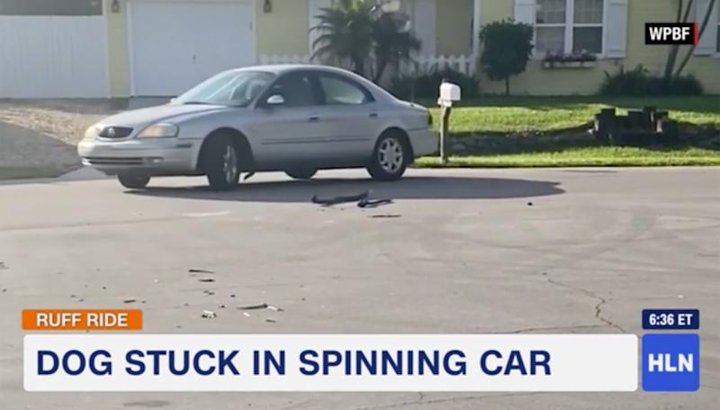 Florida Dog Spends an Hour Driving Car in Circles After Accidentally Putting It in Reverse