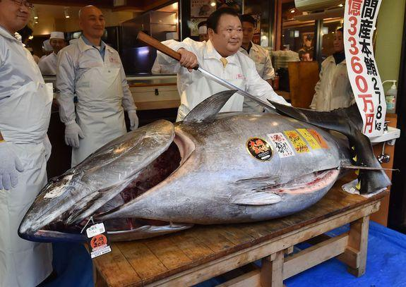 Massive tuna nets $3.1 million at Japan auction