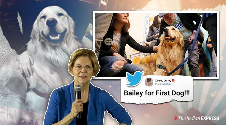 Elizabeth Warren, Elizabeth Warren's dog joins campaign trial, Democratic presidential candidate Elizabeth Warren, 2020 US presidential election, Donald Trump impeachment trial, Trending, Indian Express news