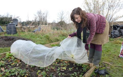 Lia Leendertz working with her strawberry plants in her allotment in Bristol. - Credit: Jay Williams