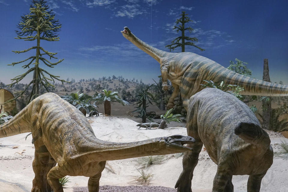 This photo provided by Randall Irmis shows Plateosaurus models at the State Museum of Natural History in Stuttgart, Germany. Plant-eating dinosaurs such as these probably arrived in the Northern Hemisphere many millions of years later than their meat-eating cousins, according to a study published on Tuesday, Feb. 16, 2021. (Randall Irmis via AP)