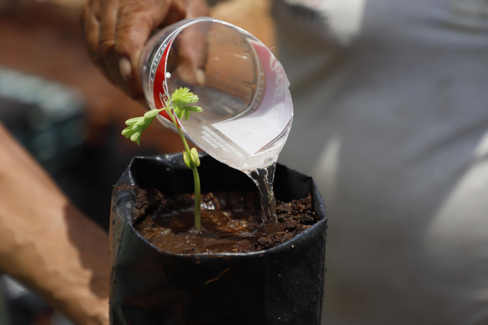 A person waters a seedling at a Planting Life site, a jobs and reforestation program promoted by Mexican President Andres Manuel Lopez Obrador, in Kopoma, Yucatan state, Mexico, Thursday, April 22, 2021. President Lopez Obrador is making a strong push for his oft-questioned tree-planting program, trying to get the United States to help fund expansion of the program into Central America as a way to stem migration. (AP Photo/Martin Zetina)