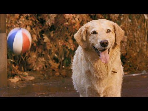 """<p>A film and TV empire began with just one boy and his golden retriever who has a natural talent for high school basketball.</p><p><a class=""""link rapid-noclick-resp"""" href=""""https://www.amazon.com/Air-Bud-Michael-Jeter/dp/B003TOVXZ0?tag=syn-yahoo-20&ascsubtag=%5Bartid%7C2139.g.36827219%5Bsrc%7Cyahoo-us"""" rel=""""nofollow noopener"""" target=""""_blank"""" data-ylk=""""slk:Stream It Here"""">Stream It Here</a></p><p><a href=""""https://youtu.be/0cOrwS3Xihw"""" rel=""""nofollow noopener"""" target=""""_blank"""" data-ylk=""""slk:See the original post on Youtube"""" class=""""link rapid-noclick-resp"""">See the original post on Youtube</a></p>"""