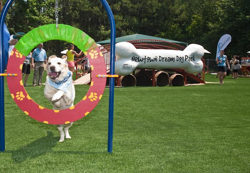 This June 15, 2011 photo released by Beneful shows Buddy, a yellow lab, making use of an agility hoop at the unveiling of America's first Dream Dog Park in Johns Creek, Ga. The $500,000 renovation of the dog park was awarded to the community by Beneful brand dog food as part of its WagWorld Dream Dog Park Contest. (AP Photo/Beneful, Jenni Girtman)