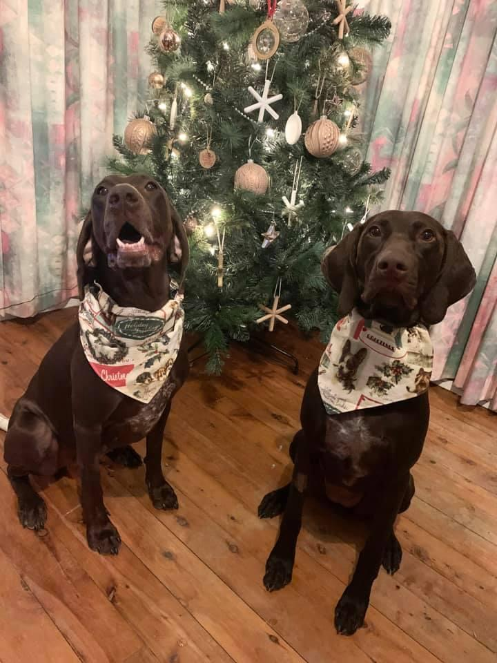Luna and Ava showing off their new Christmas bandanas. Photo: Supplied/Nikki