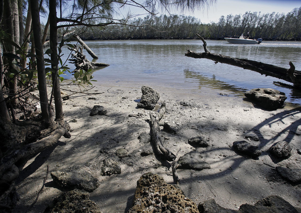 <p>Tree limbs knocked over by Hurricane Matthew in 2016 litter the shoreline as a boat passes by an inlet in the Indian River Lagoon, Fla., Friday, Feb. 10, 2017 America's most biologically diverse waterway is seriously ill. Despite hundreds of millions of tax dollars spent to reduce pollution in Florida's 153-mile-long Indian River Lagoon, an Associated Press analysis of water quality data from 2000-2015 found stark increases in pollutants that cause harmful algal blooms. (Photo: John Raoux/AP) </p>