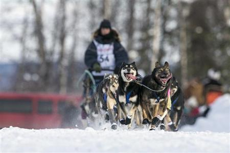 Hendricks' team races down the trail at the re-start of the Iditarod dog sled race in Willow