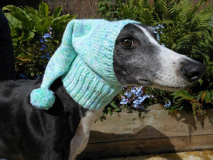 "<p>""Unlike furrier animals, like German shepherds,"" says Elliman, ""having layers is really essential for our greyhounds, and it's all the sweeter when it's in a Christmas design."" <i>(Photo: Jan Brown via <a href=""https://www.facebook.com/KnittedDogClothes/photos_stream"" rel=""nofollow noopener"" target=""_blank"" data-ylk=""slk:Facebook"" class=""link rapid-noclick-resp"">Facebook</a>)</i><br></p>"