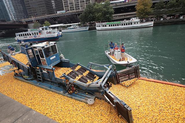 <p>Volunteers help to recover rubber ducks from the Chicago River following the Windy City Rubber Ducky Derby on August 3, 2017 in Chicago, Illinois. (Photo: Scott Olson/Getty Images) </p>