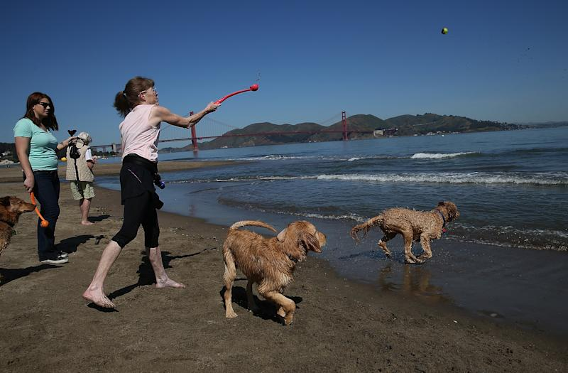 Beachgoers play fetch with dogs at Crissy Field in San Francisco, California on May 13, 2014