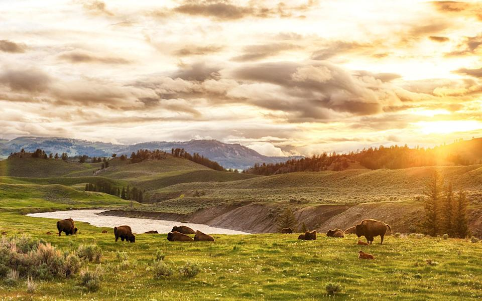Yes to Yellowstone - Getty