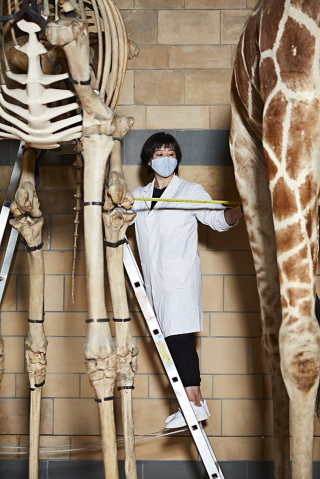Conservator Cheryl Lynn checking museum specimens are complying with social distancing