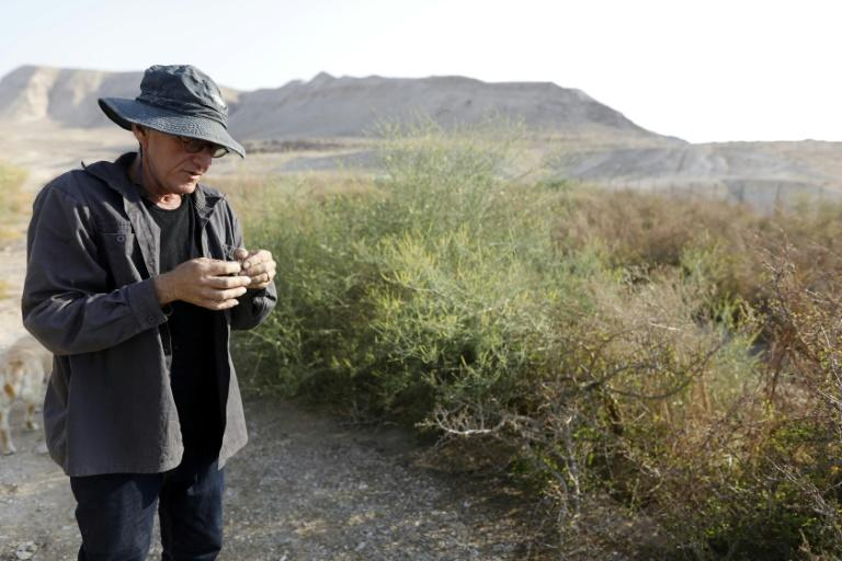 Israeli Guy Erlich's passion for ancient plants has led him to remix blends of perfume and incense that he believes were used in biblical times (AFP Photo/MENAHEM KAHANA)
