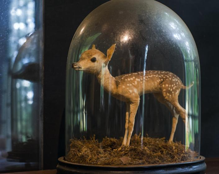 <p>Fawn in bell jar at the Skinner Museum, Mount Holyoke. (Photograph by Rosamond Purcell/Courtesy of BOND/360) </p>