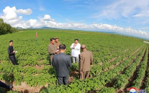 Kim Jong-un was inspecting a potato farm at the time of Mike Pompeo's visit - Credit: Reuters