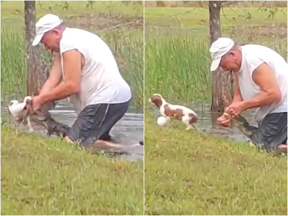 Puppy alligator rescue thumb