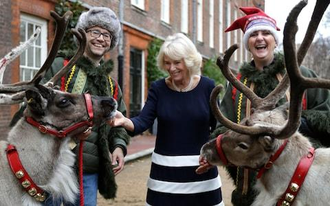 The Duchess of Cornwall meets reindeer Dancer and Blitzen during her party for children at Clarence House - Credit: AP