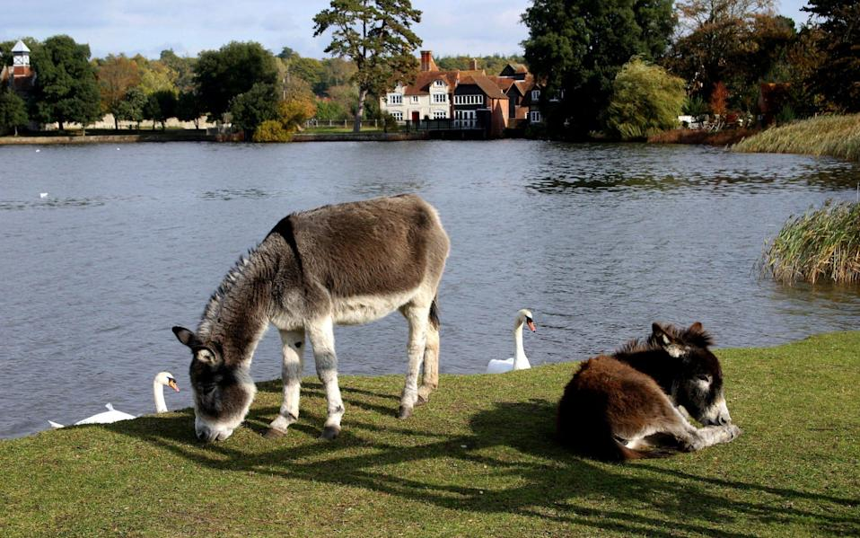 A lake near Beaulieu Village in the New Forest, Hampshire - DonaldMorgan/iStock Editorial
