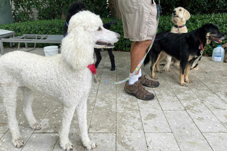 Dogs brought by volunteer Jay Harris to support those around the search-and-rescue operation after a building collapse in Surfside, Florida are seen June 28, 2021