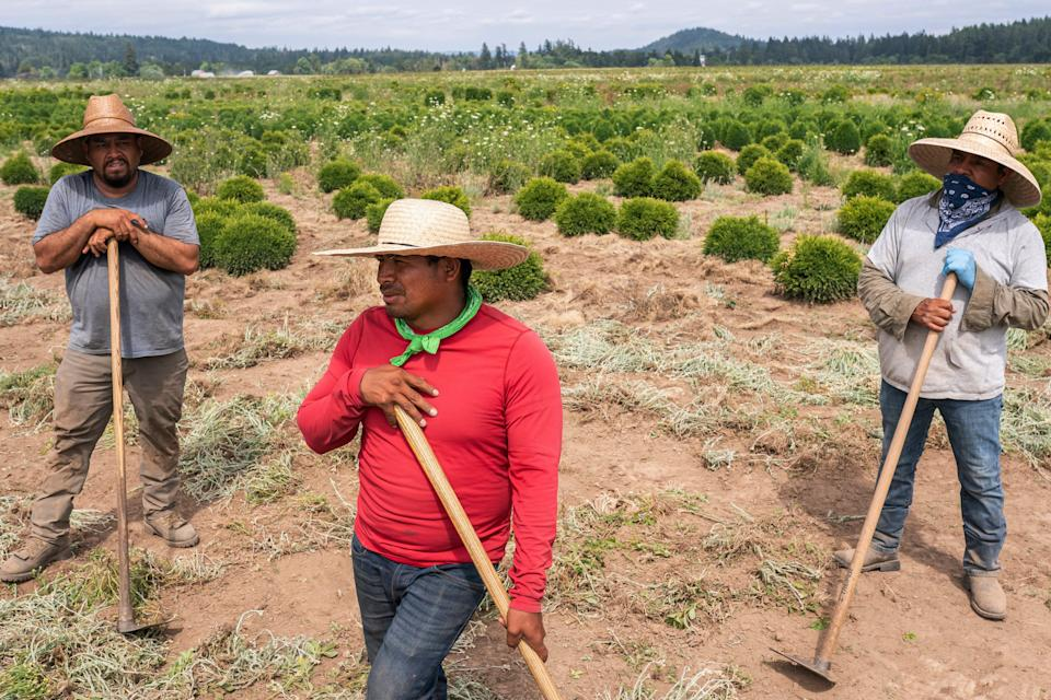 Pedro Lucas, center, nephew of farmworker Sebastian Francisco Perez, who died while working in an extreme heatwave, talks about his uncle's death, on July 1, 2021, near St. Paul, Ore.