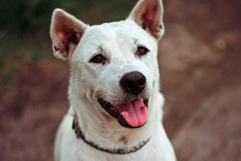 white dog that was rescued from wall