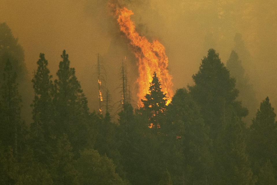 The Windy Fire burns in Sequoia National Forest, Calif., Thursday, Sept. 16, 2021. The fire has burned into the Peyrone Sequoia Grove and continues to threaten other sequoias, according to fire officials. (AP Photo/Noah Berger)