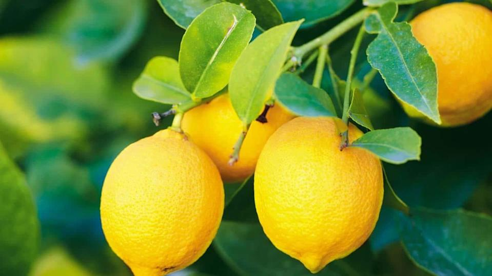 #HealthBytes: Stock up on these benefits by consuming lemons regularly