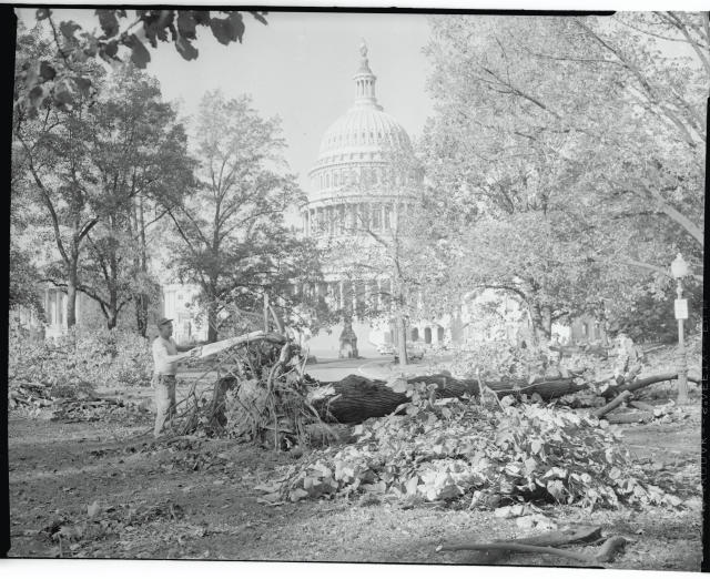 <p>Workers clear the Capitol Plaza of debris left in the wake of Hurricane Hazel which roared through Washington, D.C. on, Oct. 15, with gusts of 157 kilometres per hour. (Photo from Getty Images) </p>