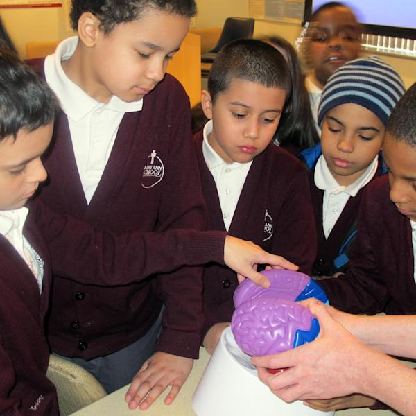 In this Feb. 25, 2014 photo, third-graders, from left, Hunter Thomas, Matthew Velez, Sebastian Mendez, Jayden Gonzalez and Elijah Farias examine a plastic model of a brain at Montefiore Hospital in the Bronx borough of New York. The hospital teaches children to recognize stroke and get victims to a hospital quickly. (AP Photo/Jim Fitzgerald)