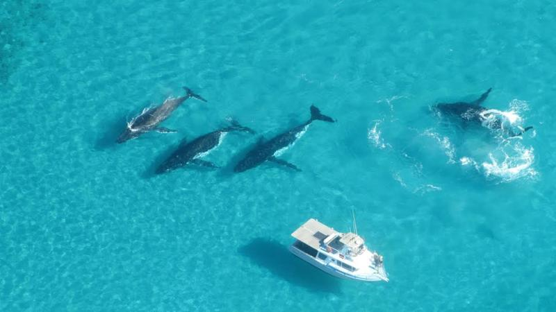 Swimming with humpback whales will soon be allowed at Western Australia's Ningaloo Marine Park.