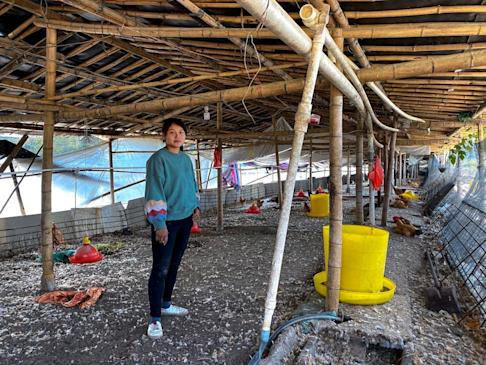 Chen Chunhua lost about 20,000 yuan (US$2,900) from raising 40,000 chickens, about 20 per cent of her husband's annual salary as a truck driver for a nearby factory. Photo: Cissy Zhou