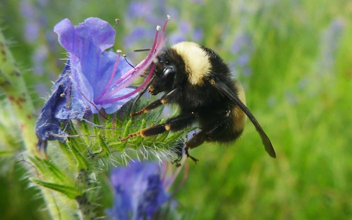 Chronic Bee Paralysis Virus has spread across most of England and Wales - REUTERS