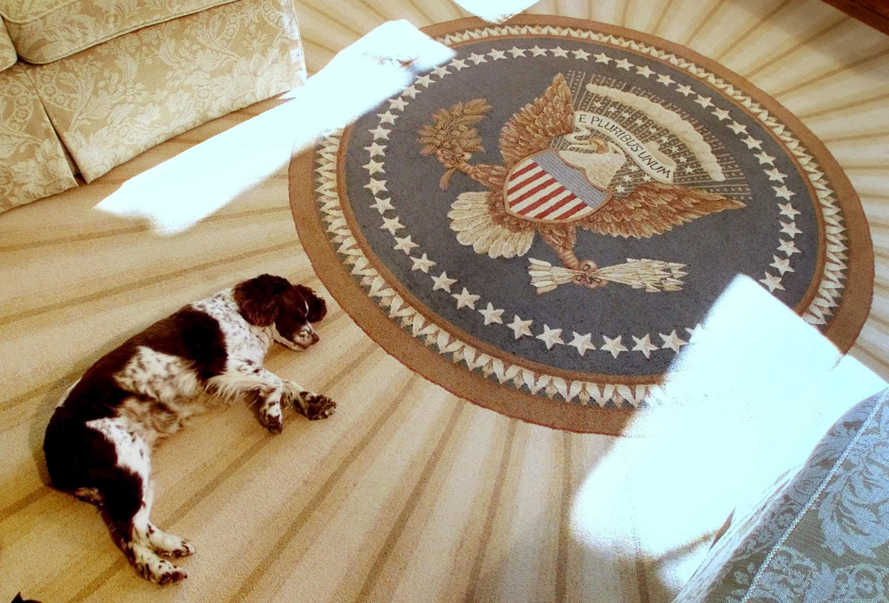 Spot, the dog of U.S. President George W. Bush and first lady, Laura,