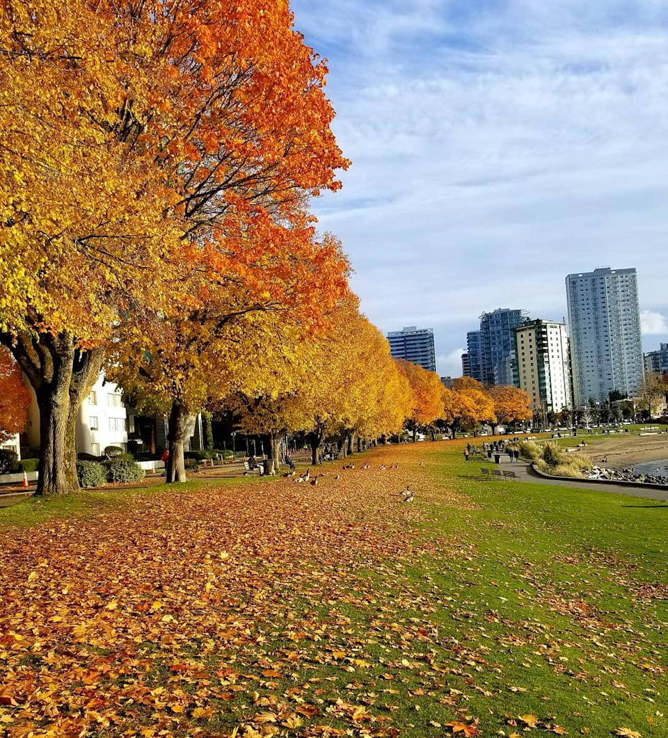 autumn in English Bay, BC. UGC Submitted by Sima Ashrafinia