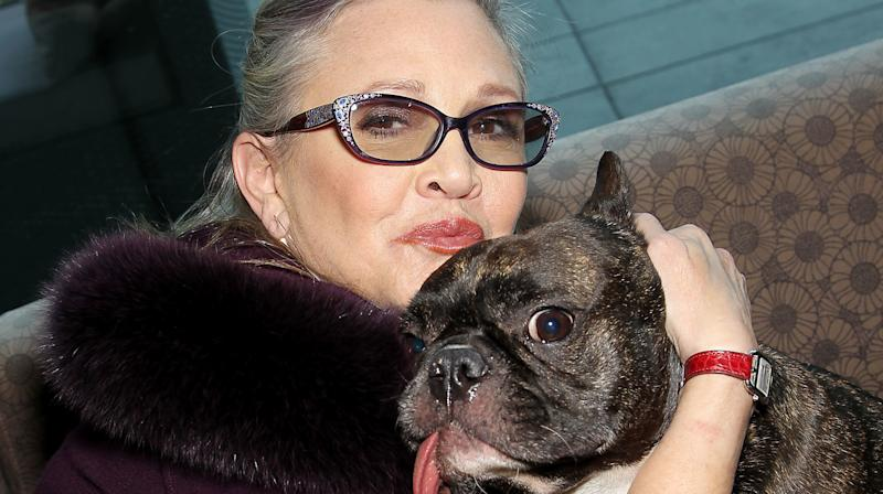'Star Wars: The Last Jedi' Director Confirms Carrie Fisher's Dog Gary Fisher Has A Cameo