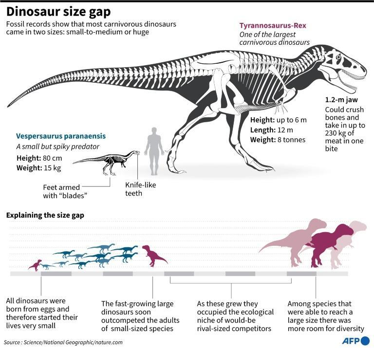 Size gap: how the predominant large carnivorous dinosaurs supressed the diversity of middle-sized dinosaurs