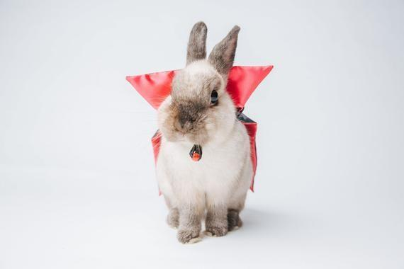 """<p>Acting like they don't already moonlight as Bunnicula come October.</p><br><br><strong>Toffee Crafts</strong> Vampire cape pet costume for small animals, $15, available at <a href=""""https://www.etsy.com/listing/559460803/vampire-cape-pet-costume-for-small"""" rel=""""nofollow noopener"""" target=""""_blank"""" data-ylk=""""slk:Etsy"""" class=""""link rapid-noclick-resp"""">Etsy</a>"""