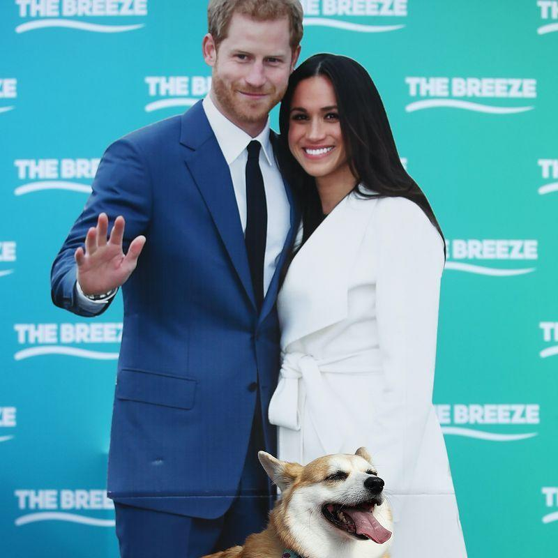 """<p>In a 2017 interview, <a href=""""https://abcnews.go.com/Entertainment/full-transcript-prince-harry-meghan-markles-engagement-interview/story?id=51415779"""" rel=""""nofollow noopener"""" target=""""_blank"""" data-ylk=""""slk:Prince Harry joked"""" class=""""link rapid-noclick-resp"""">Prince Harry joked</a> that he'd """"spent the last 33 years being barked at"""" by the dogs only for them to instantly warm up to Meghan Markle. """"The corgis took to you straight away,"""" he said. """"That's true,"""" Markle agreed. """"Just laying on my feet during tea, it was very sweet.""""</p>"""