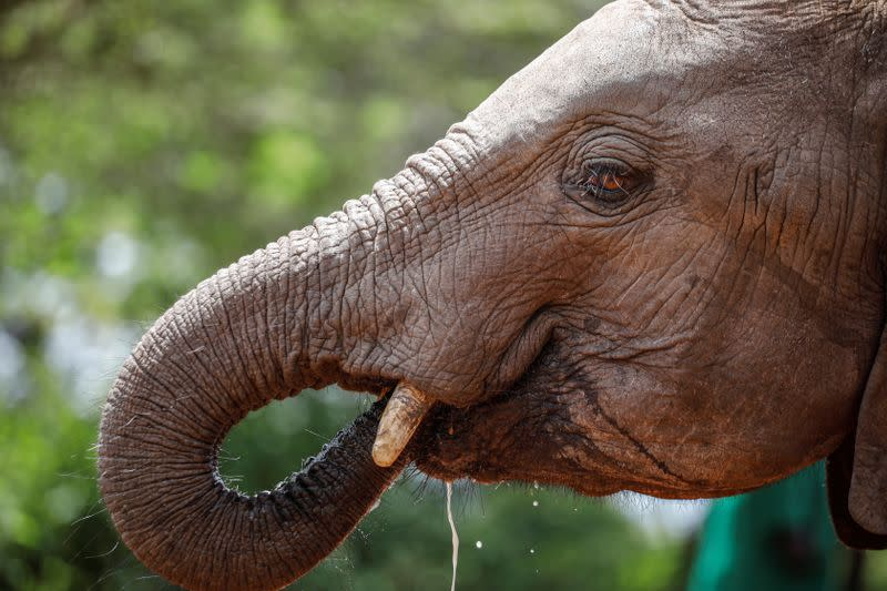 With tourists gone, Africa's conservationists brace for the worst