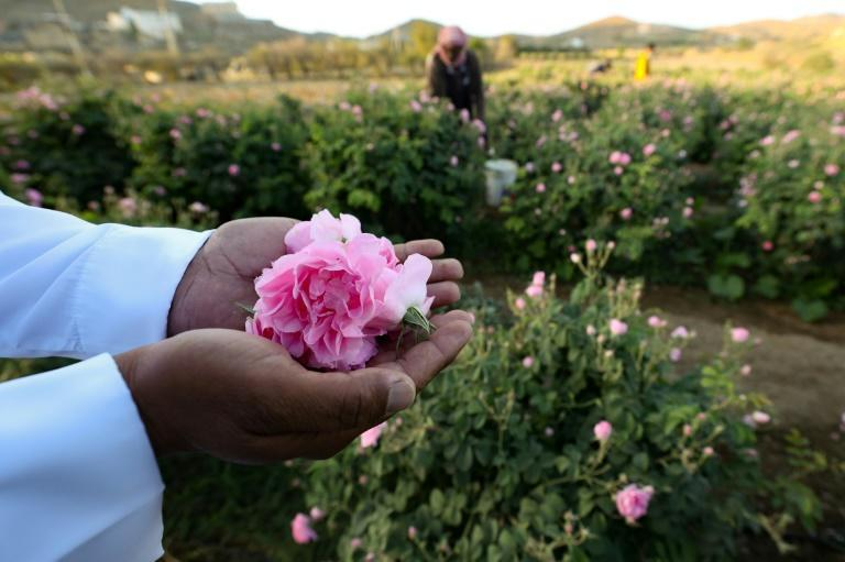 Known as the city of roses, with approximately 300 million blooms every year, Taif has more than 800 flower farms