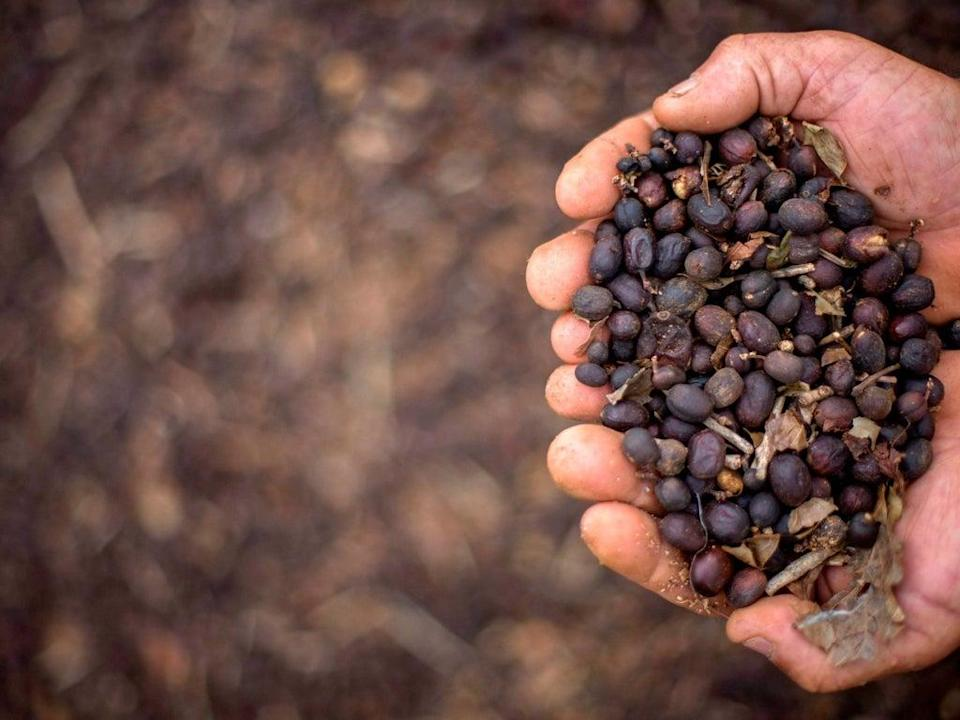 The South East Asian country is the world's second largest exporter of coffee  (AFP/Getty)