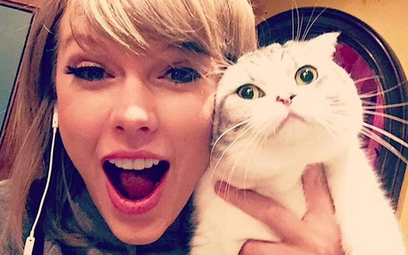 Taylor Swift regularly shares pictures online with her pet cats. - SUPPLIED BY XPOSUREPHOTOS.COM
