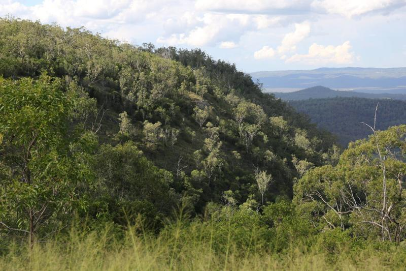 Mount Lofty was once so thick with koalas it was known as Bear Hill. Source: Supplied