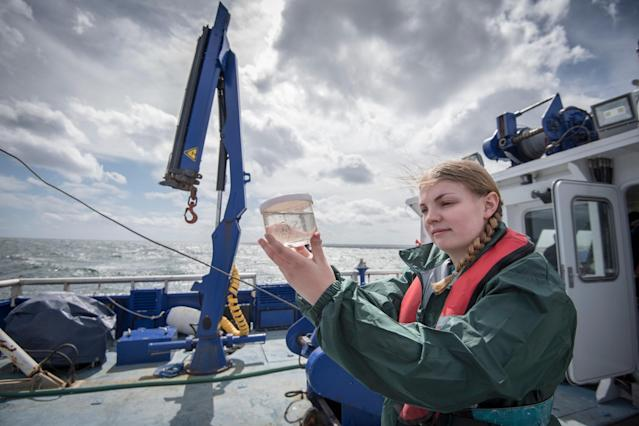 <p>No. 7 highest-paid job: Geoscientist and oceanographer<br>Average full-time hourly wage: $55.50<br>(Monty Rakusen / Getty Images) </p>
