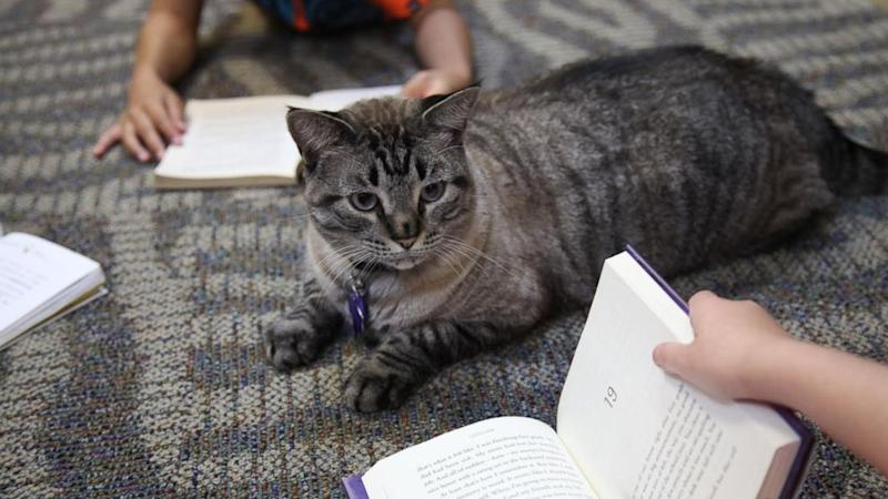 Beloved Cat Will Keep His Job at the Local Library After International Backlash