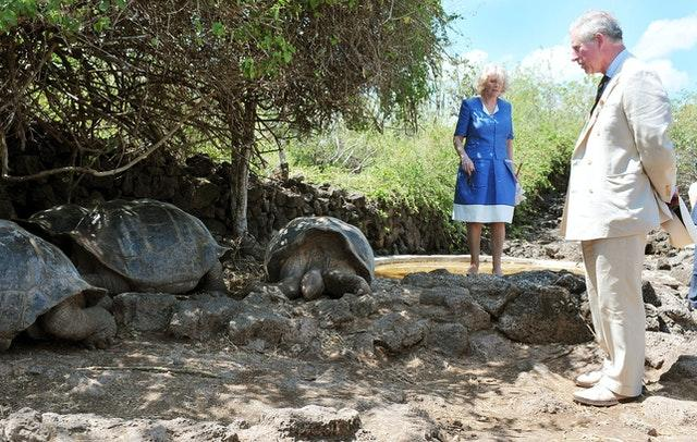 The Prince of Wales and the Duchess of Cornwall come face to face with giant tortoises at the Galapagos National Park. John Stillwell/PA Wire