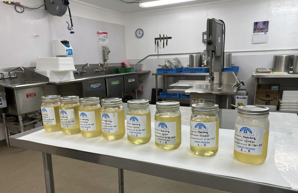 In this Nov. 10, 2020, photo provided by the Maniilaq Association, a batch of finished seal oil is shown in Kotzebue, Alaska, after it been heated to remove impurities and toxins. In January 2021, the Alaska Department of Environmental Conservation approved seal oil to be served at the Maniilaq elder care home, believed to be the first-ever approved use for seal oil in the U.S. (Maniilaq Association via AP)