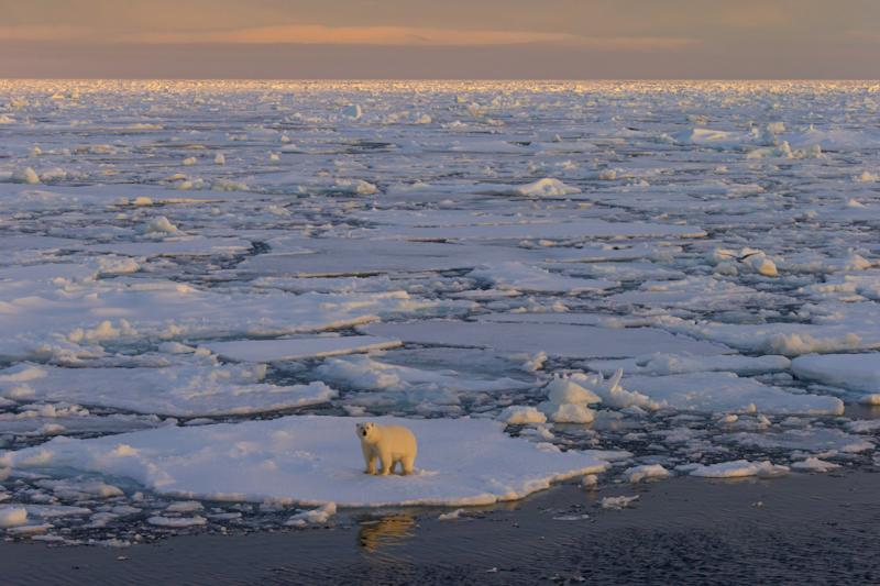 A polar bear walks on pack ice at sunset in Svalbard, Norway. (Photo by: Arterra/UIG via Getty Images)